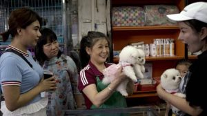 Customers in Chinese pet shop
