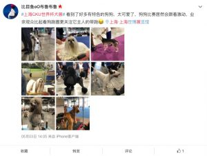 Visitor comments on Shanghai World Dog Show 2019
