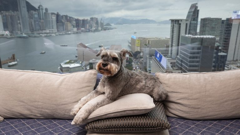 Luxury Pet Hotels