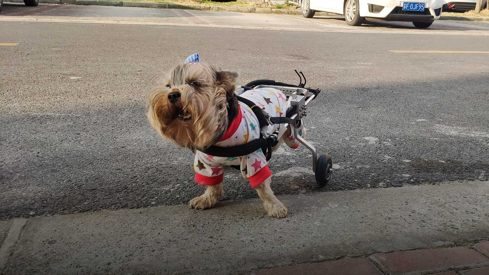 Pet wheelchairs and mobility aids