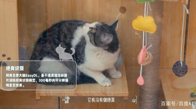 Cat Shelter in China
