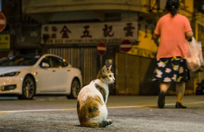 Cat in Hong Kong streets